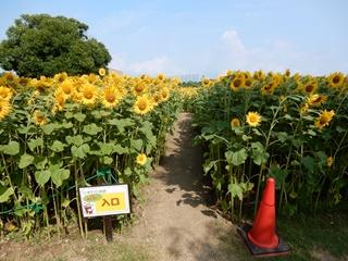 P_garden35