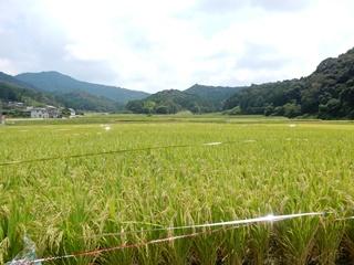 E_toyokawa10
