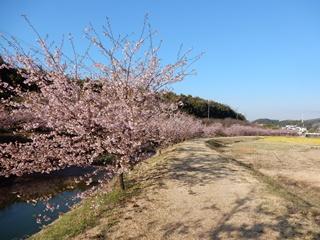 R_hanakawa03