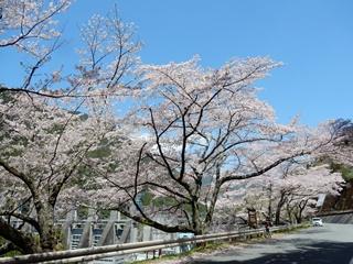 L_akiha14