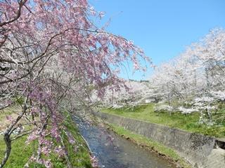 P_shishigahana34