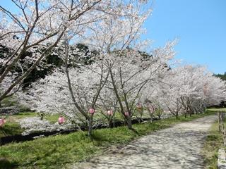 P_shishigahana35