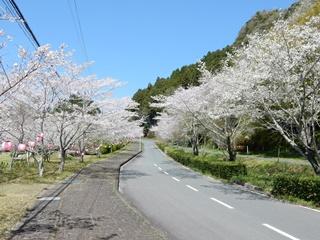 P_shishigahana36