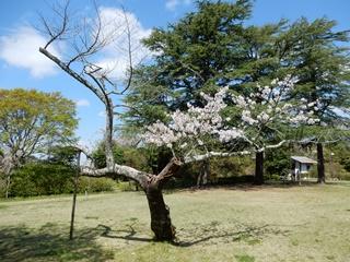 P_tobayama28