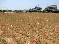 E_kamihara10