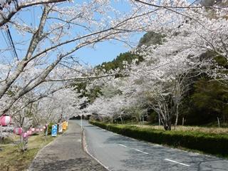 P_shishigahana37
