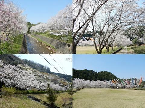 P_shishigahana38