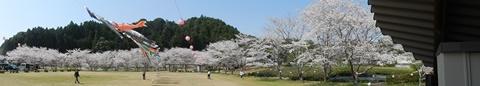 P_shishigahana40