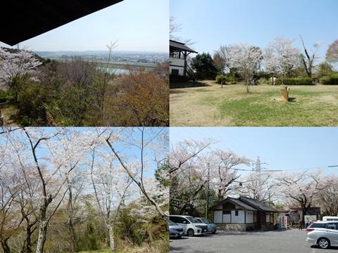 P_tobayama31