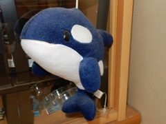 Orca01