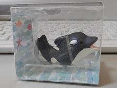 Orca21