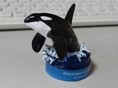 Orca25