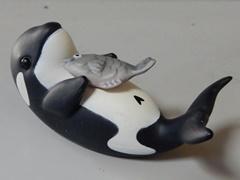 Orca26