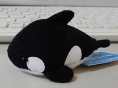 Orca30