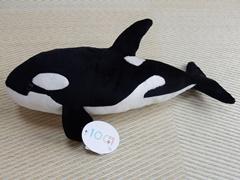 Orca54